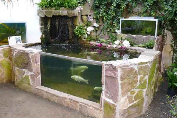 Fiskesø